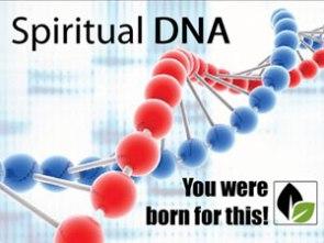 lifelinecc-spiritual-dna